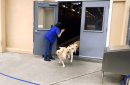 dogs fire drill