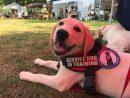 hero pups